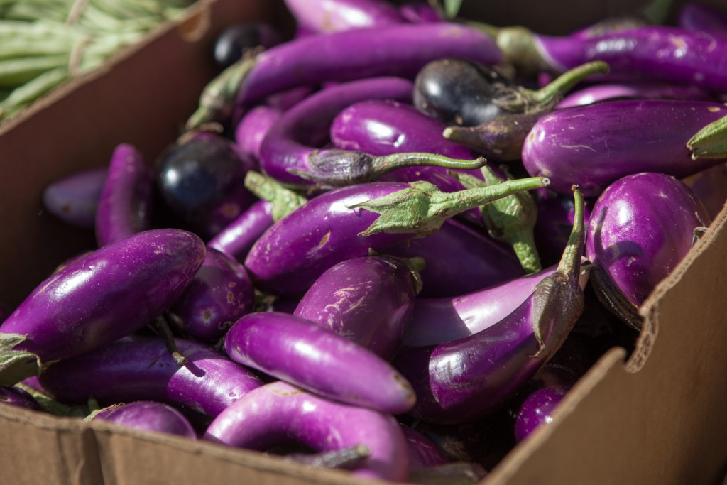 Eggplants at the Free Farm Stand
